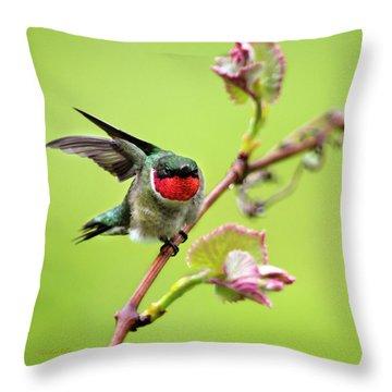 Ruby Garden Hummingbird Throw Pillow by Christina Rollo