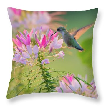 Ruby Throated Hummingbird 3 Square Throw Pillow