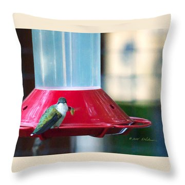 Ruby-throated Hummingbird At Feeder Throw Pillow by Edward Peterson