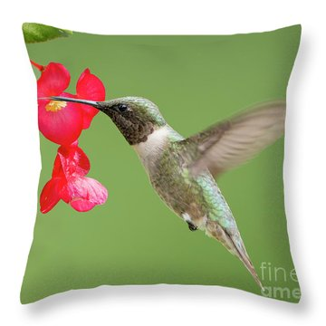 Throw Pillow featuring the photograph Ruby Throated Hummingbird Feeding On Begonia by Bonnie Barry