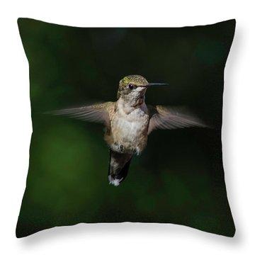 Ruby Throated Hummingbird Throw Pillow