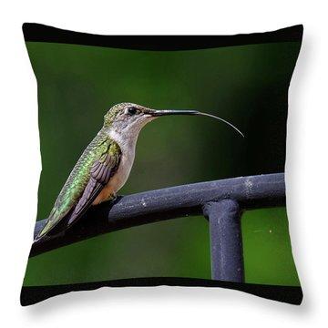Ruby-throated Hummingbird Tongue Throw Pillow
