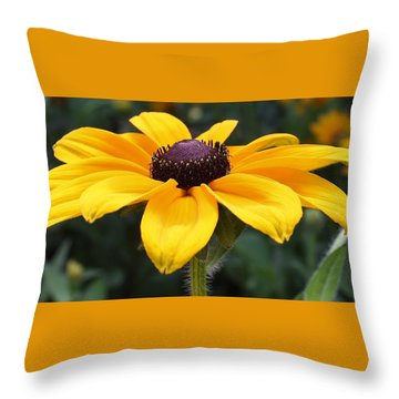 Rudbeckia Bloom Up Close Throw Pillow