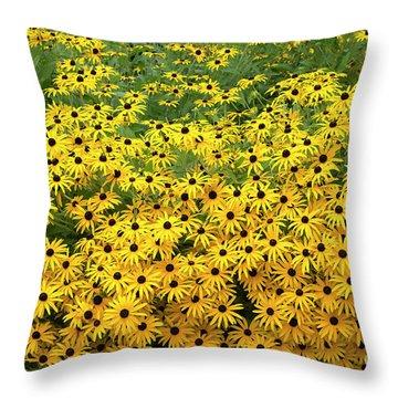 Throw Pillow featuring the photograph Rudbeckia Fulgida Deamii Flowers by Tim Gainey