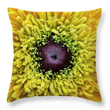 Throw Pillow featuring the photograph Rudbeckia Hirta Maya by Tim Gainey