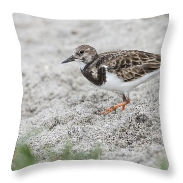 Ruddy Turnstone Foraging On The Beach Throw Pillow