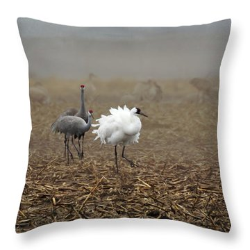 Ruffle My Feathers Throw Pillow
