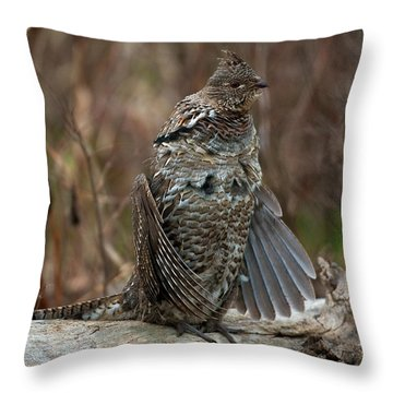 Ruffled Grouse Drumming Throw Pillow by Gary Langley
