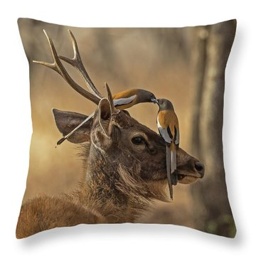 Rufous Treepies Throw Pillow