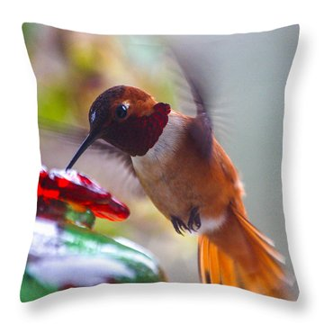 Rufus Hummingbird At The Feeder Throw Pillow
