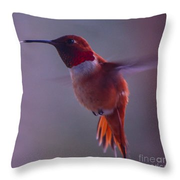 Rufus Hummingbird Throw Pillow
