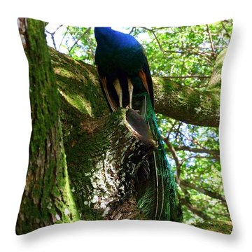 Ruler Of The Roost Throw Pillow by Mary Deal