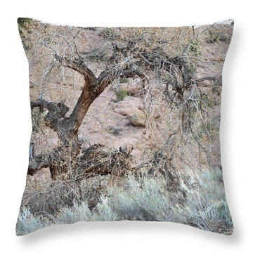 Throw Pillow featuring the photograph Rustic Desert Tree by Andrea Hazel Ihlefeld