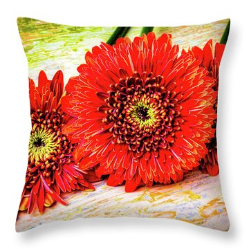 Rustic Red Dasies Throw Pillow by Garry Gay