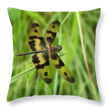Ryothemis Dragonfly Throw Pillow