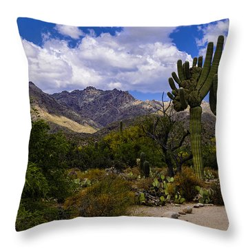 Sabino Canyon No4 Throw Pillow