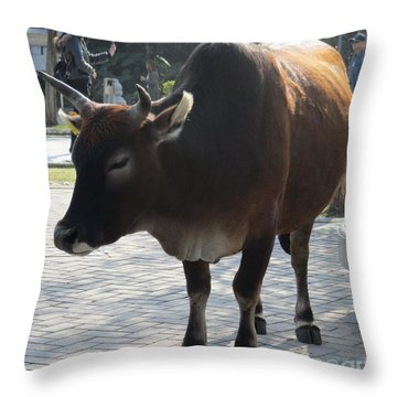 Throw Pillow featuring the photograph Sacred Cow 2 by Randall Weidner