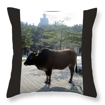 Throw Pillow featuring the photograph Sacred Cow 3 by Randall Weidner