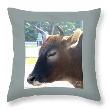 Throw Pillow featuring the photograph Sacred Cow 4 by Randall Weidner