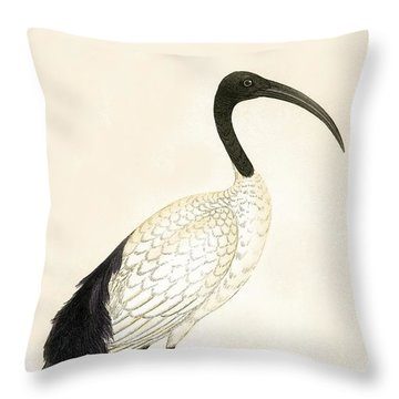 Sacred Ibis Throw Pillow by English School