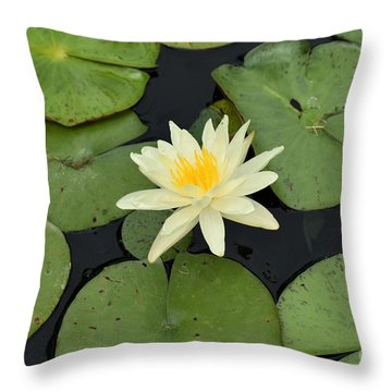Throw Pillow featuring the photograph Sacred Lotus by James Fannin