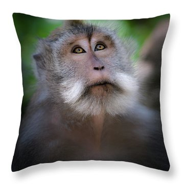 Sacred Monkey Forest Sanctuary Throw Pillow by Larry Marshall