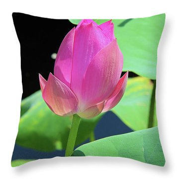 Sacred Pink Throw Pillow by Inspirational Photo Creations Audrey Woods