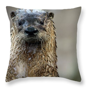 Sad Looking  Throw Pillow by Karol Livote