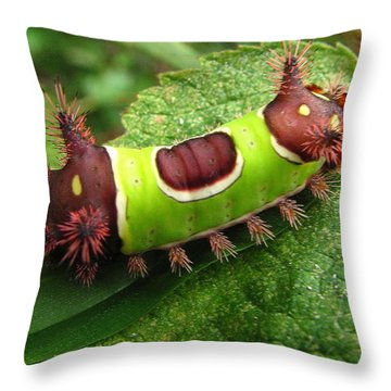 Saddleback Caterpillar Throw Pillow