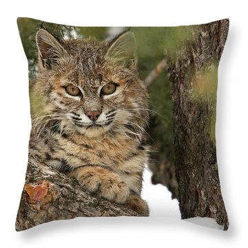 Catbird Seat   Throw Pillow by Aaron Whittemore