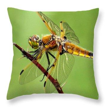 Saffron-winged Meadowhawk Throw Pillow