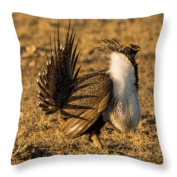 Sage Grouse Mating Display Throw Pillow by Yeates Photography