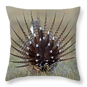 Sage-grouse Tail Fan Throw Pillow