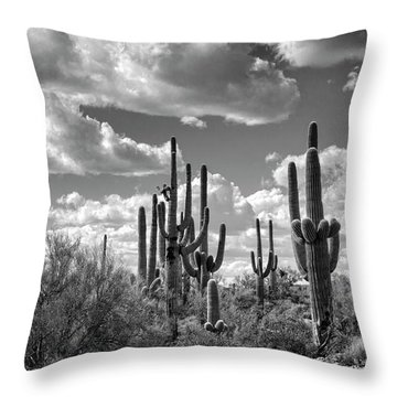 Throw Pillow featuring the photograph Saguaro And Blue Skies Ahead In Black And White  by Saija Lehtonen