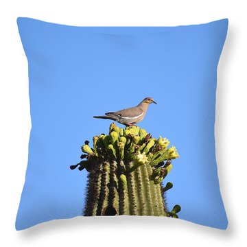 Saguaro Dove 1 Throw Pillow