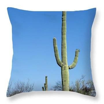Saguaro National Park Arizona Throw Pillow