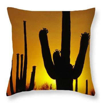 Saguaro Sunset Throw Pillow by Sandra Bronstein