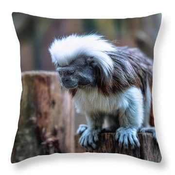 Throw Pillow featuring the photograph Saguinus Oedipus  by Traven Milovich
