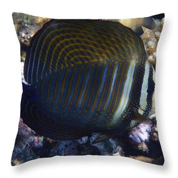 Sailfin Tang  Throw Pillow