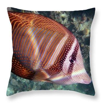 Sailfin Tang Makadi Bay Throw Pillow