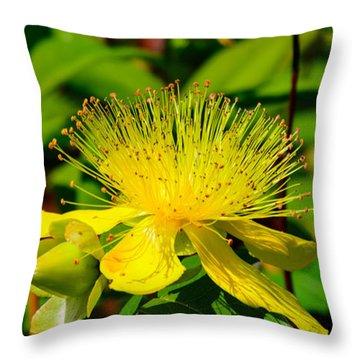 Saint John's Wort Blossom Throw Pillow