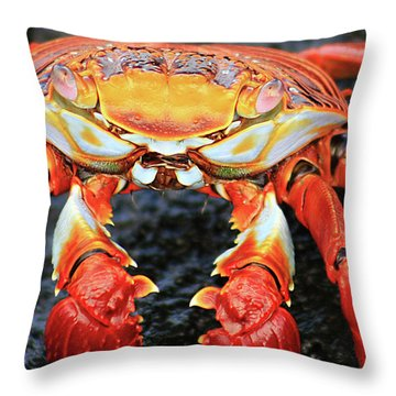 Sally Lightfoot Crab Throw Pillow by Sue Cullumber