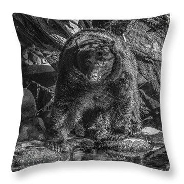 Salmon Seeker Black Bear  Throw Pillow