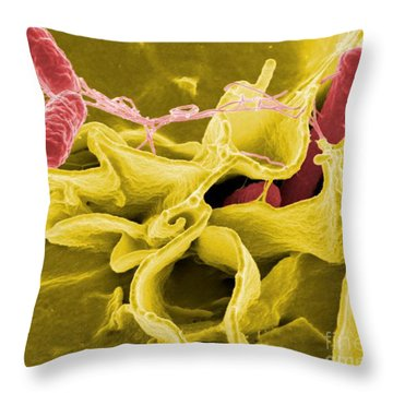 Salmonella Bacteria, Sem Throw Pillow by Science Source