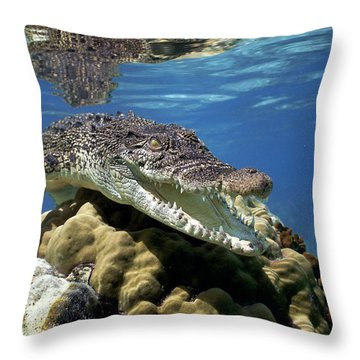 Saltwater Crocodile Smile Throw Pillow by Mike Parry