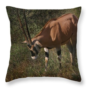 Samburu Oryx Throw Pillow