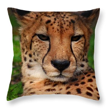 Throw Pillow featuring the photograph Samson by Michiale Schneider