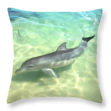 Throw Pillow featuring the photograph Samu 1 , Monkey Mia, Shark Bay by Dave Catley