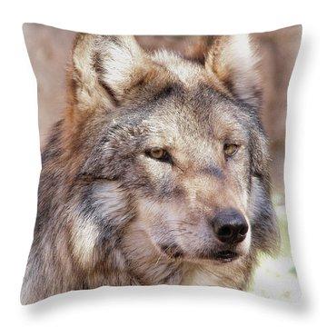 Sancho Throw Pillow