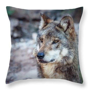 Sancho Searching The Area Throw Pillow